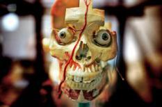 UTRECHT - Een impressie van de tentoonstelling 'Bodybeeld-het menselijk lichaam ontleed' in het Universiteitsmuseum in Utrecht. ANP PHOTO JUAN VRIJDAG
