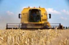 HAARLEMMERMEER - In de Haarlemmermeer wordt vrijdag het tarwe gedorst. De prijs van graan schiet omhoog, nu de landen in het zogeheten Zwarte Zee-gebied getroffen worden door hitte en droogte. De prijs van gerst is in vier weken tijd verdubbeld, en die van tarwe ligt zo'n 60 tot 70 procent hoger. ANP XTRA NILS VAN HOUTS