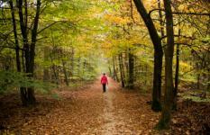 VIERHOUTEN ARCHIEFFOTO - Herfstbos bij Vierhouten op de Veluwe. De organisatie van het Nederlandse natuurbeheer moet in de toekomst opgedeeld worden in drie gebieden; een deltapark, het duinlandschap en een bospark. Directeur Johan van de Gronden van het Wereld Natuur Fonds presenteert zijn plan vandaag in de Tweede Kamer. ANP LEX VAN LIESHOUT