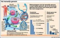 Het menselijk genoom in kaart gebracht. AFBEELDING: menselijk lichaam, cel, chromosoom, DNA-molecule, gen, mens,fruitvlieg. TREFWOORD: DNA, genen, geneeskunde, erfelijkheid, genetica. FORMAAT: 150 x 95 mm.