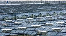 'S GRAVENZANDE - Glasbouw Kassen in het Westland bij 's Gravenzande. ANP PHOTO KOEN SUYK