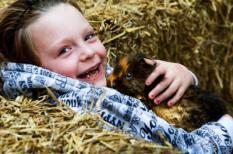 UTRECHT - Een meisje knuffelt met een cavia. Bezoekers van de Utrechtse Dierendagen in de veemarkthallen kunnen dit weekend genieten van een dierenshow met een oppervlakte van meer dan 12.000 m2. De publiekstrekker van deze editie is de Seramakip, die niet veel groter is dan twee colablikjes. ANP PHOTO ROBIN UTRECHT