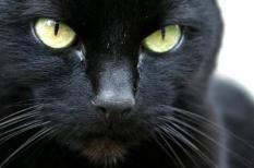 RIJSWIJK - Een zwarte kat op vrijdag de 13e belooft weinig goeds. Uit een Nederlands onderzoekje bleek echter juist dat Nederlanders op vrijdag de 13e in werkelijkheid net iets minder pech hebben dan op andere vrijdagen.  ANP PHOTO CYNTHIA BOLL
