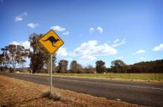 Opgepast, overstekende kangoeroes!