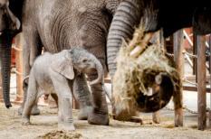 Olifantje geboren