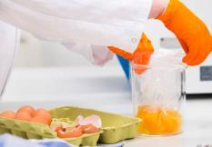 2017-08-01 14:33:21 WAGENINGEN - Een medewerker van het laboratorium van de Nederlandse Voedsel- en Warenautoriteit (NVWA) onderzoekt eieren op de aanwezigheid van het gif fipronil. ANP PIROSCHKA VAN DE WOUW