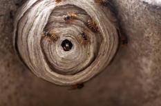 9739319 - wasp nest