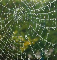 6076762 - a spider web with some water droplets early in the morning
