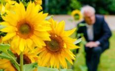 2019-07-15 08:59:44 HILVERSUM - Burgemeester Pieter Broertjes plant samen met pastoor Jules Dresme een Oekraiense zonnebloem bij de Sint Vituskerk. De zonnebloemzaden komen uit het veld in Oekraine waar het MH17 toestel is neergestort. Deze zaadjes zijn opgekweekt tot zonnebloemen die op verschillende locaties in Hilversum worden geplant. ANP MARCO DE SWART