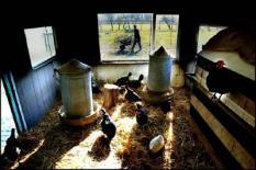 NLD-20032802-ROCKANJE: Een autistische man loopt op zorgboerderij 'De Doornhof' in Rockanje met een kruiwagen met takken. Op Voorne-Putten hebben de 'multifunctionele' boeren zich verenigd om het zogenoemde agrotoerisme te promoten. Zie bericht bin: ROCKANJE-BOEREN-LANDBOUW. ANP FOTO/ROBIN UTRECHT