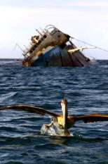 GUQ01 - 20010128 - SAN CRISTOBAL, ECUADOR : A pelican alights from the ocean before the crippled Ecuadoran tanker 'Jessica' 28 January 2001 near San Critobal on the Galapagos archipelago. Cleanup crews had new tasks to perform to contain spreading damage from the massive oil slick threatening the world-famous environment, wildlife and human residents. The spill has already taken its toll on the island chain's unique and endangered wildlife species. Some 80 pelicans, 50 sea lions, six sea turtles, five bluefoot booby birds and two marine iguanas have been affected by the oil, according to the International Fund for Animal Welfare and Ecuadoran officials. EPA PHOTO AFP/MARTIN BERNETTI/mb/pa/sw