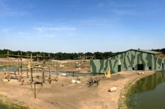 HILVARENBEEK - In safaripark Beekse Bergen in Hilvarenbeek worden maandag de laatste voorbereidingen getroffen voor de nieuwe apenheul die dinsdag wordt geopend. ANP PHOTO JEROEN PUTMANS