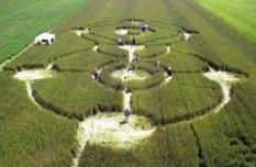 epa000248857 (FILES) A file photo dated 02 July 2001 of circles in a crop field near the trown of Wylatowo, Poland. A Polish town plans to ask the European Union for the equivalent of  million (102 million euros) to help it build facilities for hundreds of visitors lured by its mysterious crop circles, a local official said on Tuesday, 10 August 2004. Crop circles -- areas in farmers© fields where grain has been flattened, often in complex interlocking patterns -- have been appearing in Wylatowo, western Poland, for four years. EPA/Wojtek Szabelski