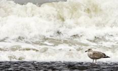 PETTEN - De zeedijk bij het Noordhollandse Petten is een van de zwakke schakels in de Noordzeekust. Om de stijging van de zeespiegel door klimaatverandering het hoofd te bieden, zullen tien zwakke schakels langs de Noordzee versterkt moeten worden. Na bijna een jaar studeren komt de Deltacommissie onder leiding van voormalig minister Cees Veerman woensdag met adviezen hoe Nederland ook in de verre toekomst veilig blijft voor het wassende water. ANP PHOTO KOEN VAN WEEL