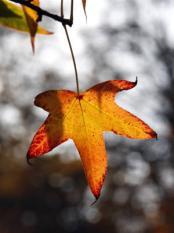OVERVEEN - Herfst op Landgoed Elswout in Overveen. ANP PHOTO KOEN SUYK