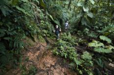 Tobago: Oudst beschermde regenwoud ter wereld